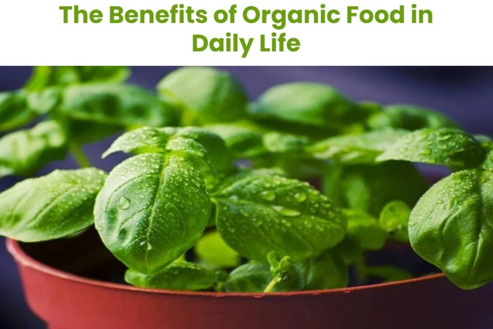 The Benefits of Organic Food in Daily Life
