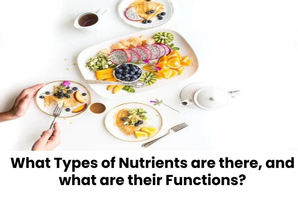 What Types of Nutrients are there, and what are their Functions?